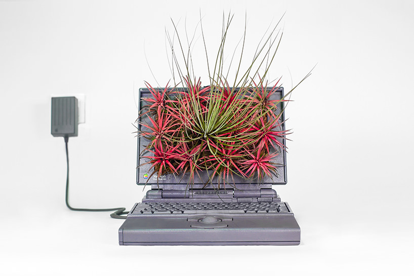 plant-your-mac-mr.-plant-christophe-guinet-t4agency11