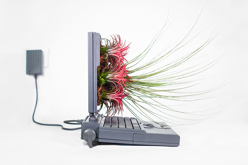plant-your-mac-mr.-plant-christophe-guinet-t4agency12