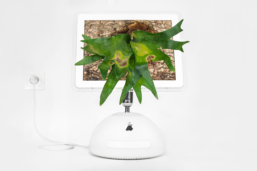 plant-your-mac-mr.-plant-christophe-guinet-t4agency14