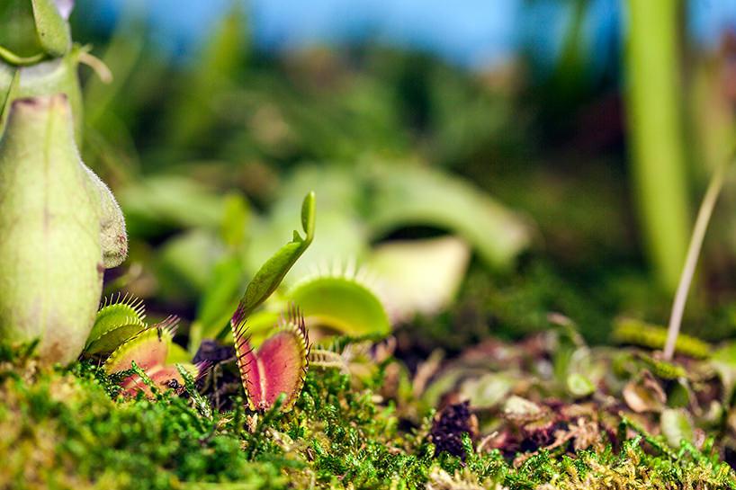 plant-your-mac-mr.-plant-christophe-guinet-t4agency2