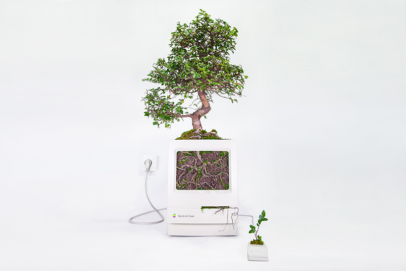 plant-your-mac-mr.-plant-christophe-guinet-t4agency4