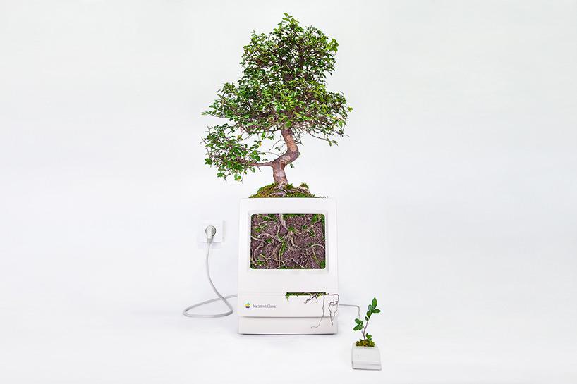 plant-your-mac-mr.-plant-christophe-guinet-t4agency4