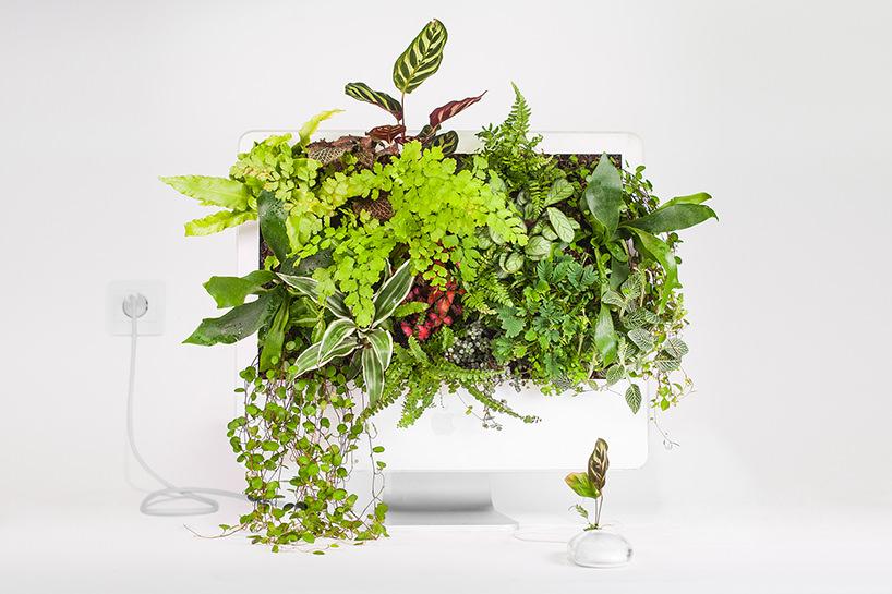 plant-your-mac-mr.-plant-christophe-guinet-t4agency6