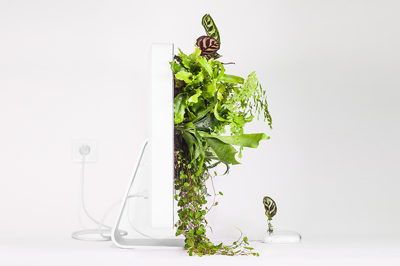plant-your-mac-mr.-plant-christophe-guinet-t4agency7