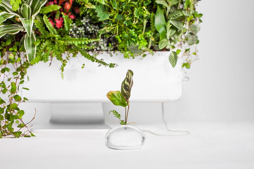 plant-your-mac-mr.-plant-christophe-guinet-t4agency8