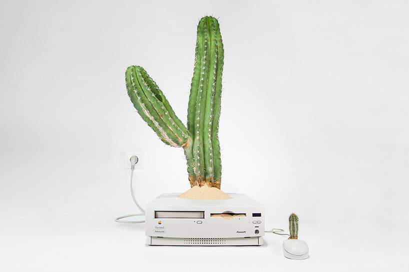 plant-your-mac-mr.-plant-christophe-guinet-t4agency9