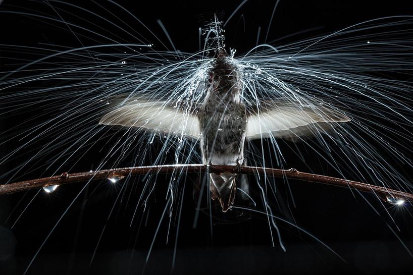 anand-varma-slo-mo-videos-hummingbirds-t4agency-001