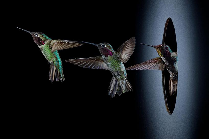 anand-varma-slo-mo-videos-hummingbirds-t4agency-002