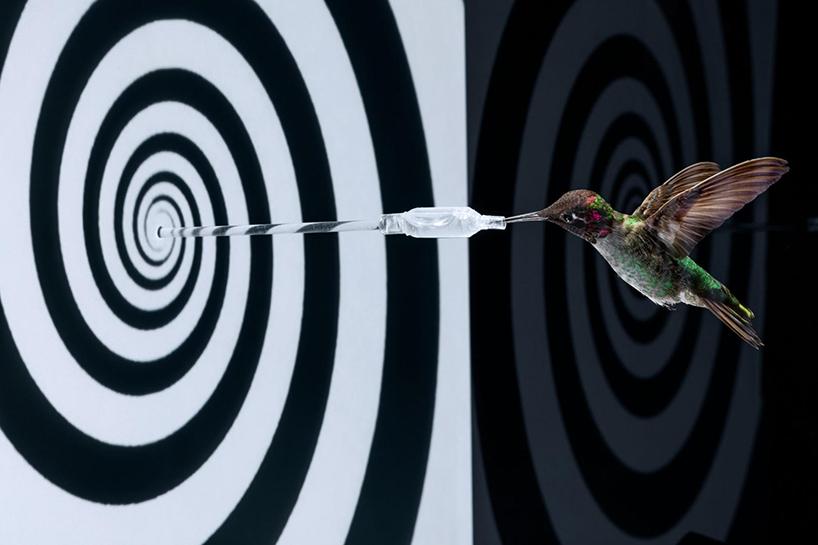 anand-varma-slo-mo-videos-hummingbirds-t4agency-004