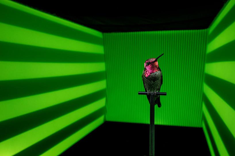 anand-varma-slo-mo-videos-hummingbirds-t4agency-006