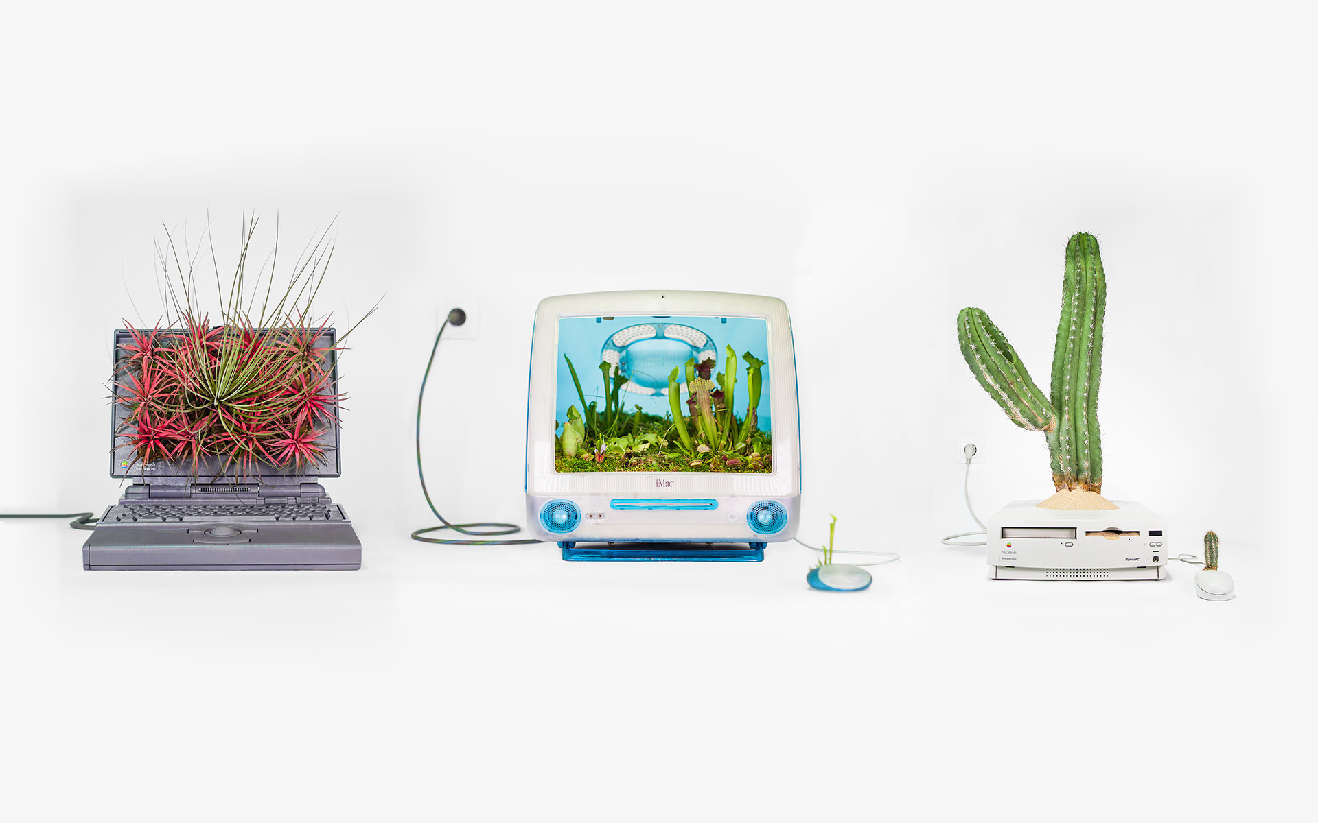 plant your mac